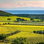 Bolgheri and Super Tuscans wine tasting