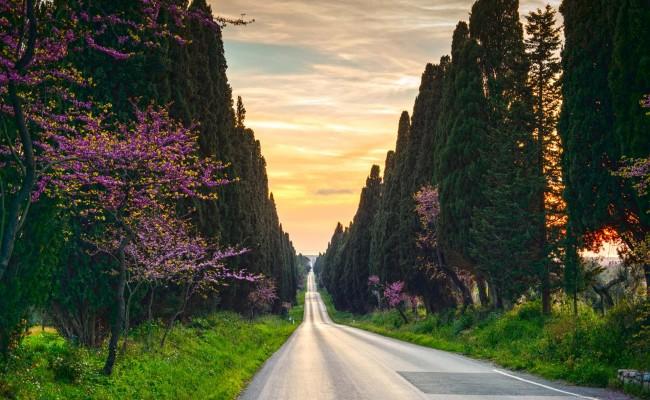 castagneto-cypresses-tree-straight-boulevard